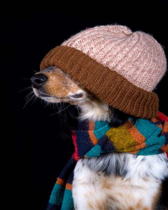 25-dogs-bundled-up-for-winter-654m